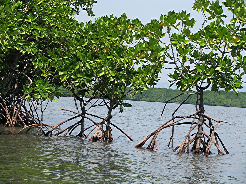 Mother Nature Cambodia