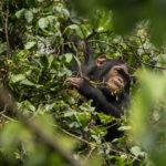 Guardiões de Virunga