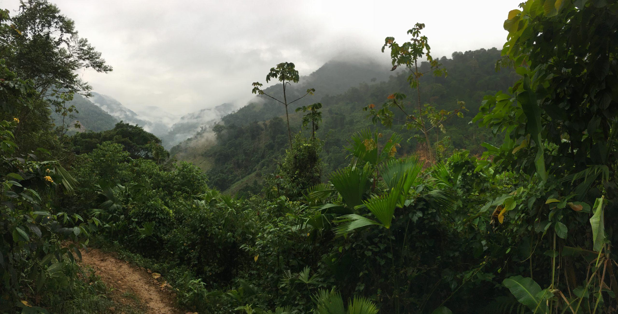Gonawindúa Tayrona Organization – OGT