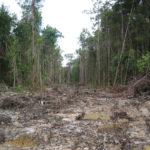 Defensores dos direitos das terras indígenas de Kinipan